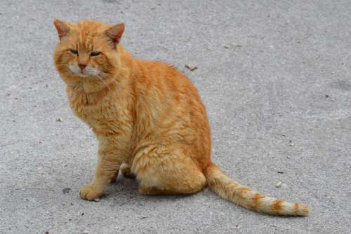 Cat Nature Outdoors Animal