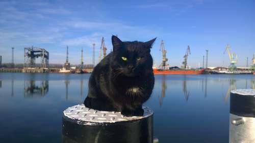 Cat Bollard Port Bay Zaton River Danube Reni