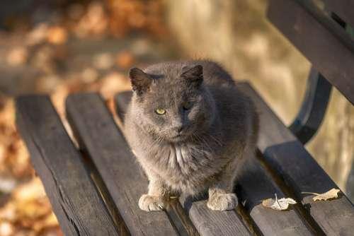 Cat Animal Pet Kitten Fur Portrait Nature