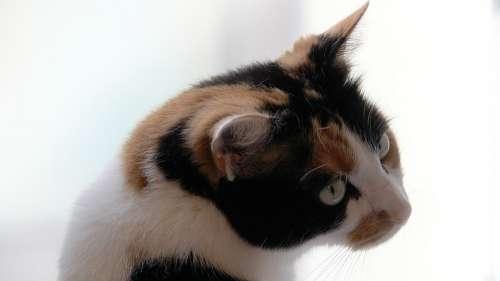 Cat Kitten Domestic Cat Cat'S Eyes Mieze Playful