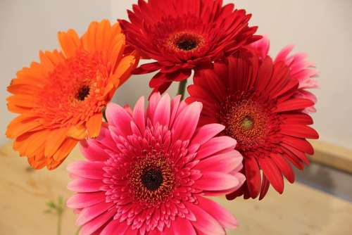 Chrysanthemum Bright Bouquet Flower Pink Red