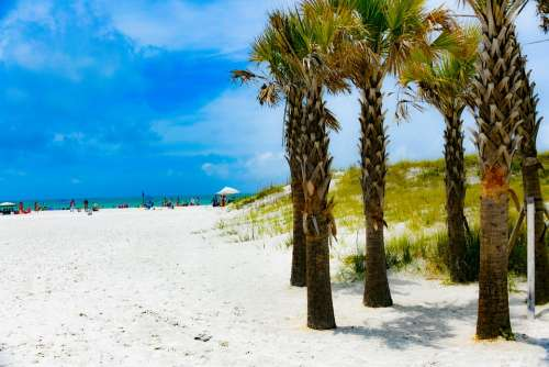 Clearwater Beach Palm Tree Sand Water Coast Trees