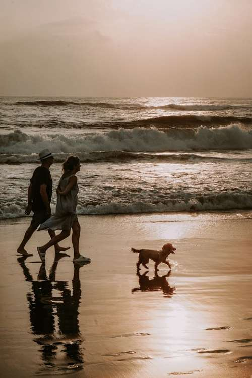 Couple Dog Walk Beach Bali Wave Shores Sea