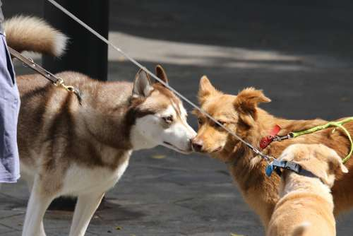 Dogs Meeting Friendship Sniff Respect