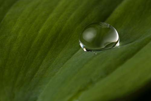 Drop Of Water Leaf Rain Nature Close Up Green