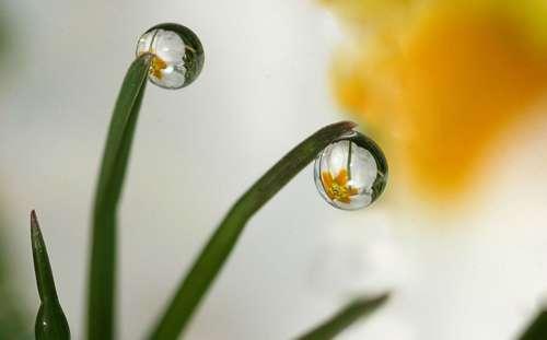 Drops Plant Nature Green