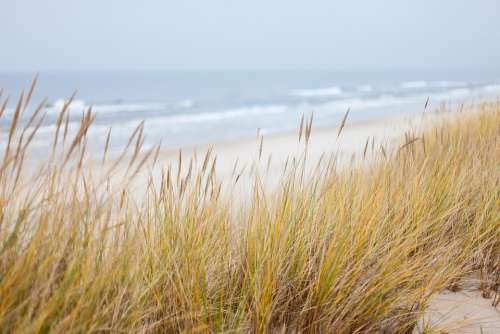 Dunes Sea Baltic Sea Beach Coastline Nature Sand