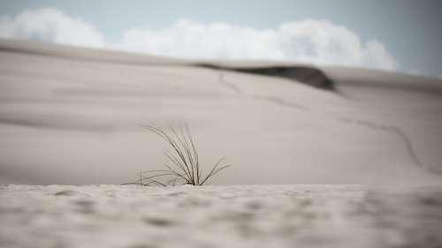Dunes Sand Dunes Poland Summer Sand Dry Landscape