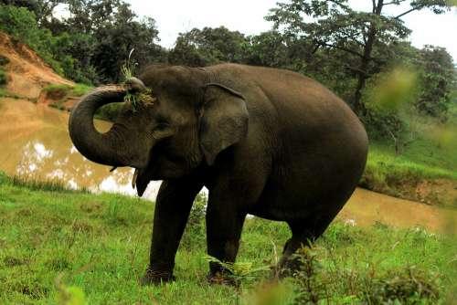 Elephant Animals Nature Wildlife Safari