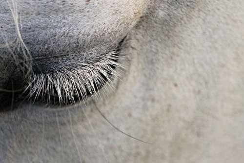 Eye Eyelashes Horse Animal Close Up Eyelid View