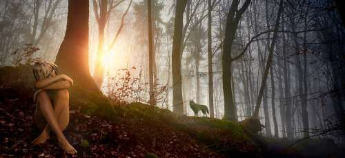 Fantasy Forest Girl Wolf Nature Landscape Trees