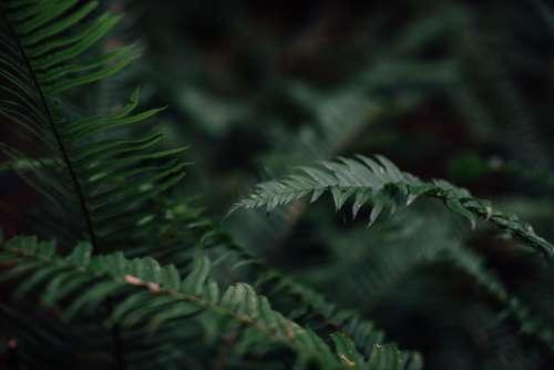 Fern Plant Flora Leaf Botany Nature Green Forest