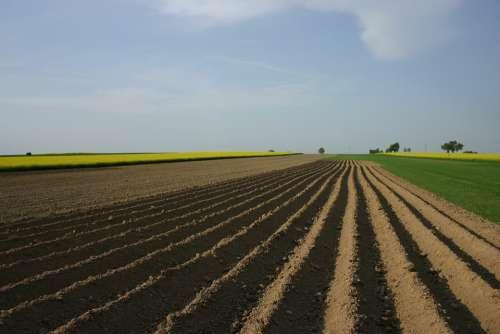 Fields Field Agriculture Landscape Village Earth