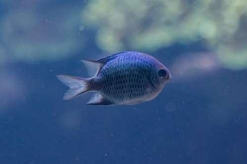 Fish Aquarium Zoo Scale Animal Terrarium Close Up