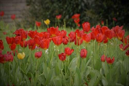 Flower Plants Garden Nature Romance Fleuri Petals
