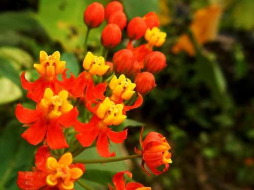 Flower Orange Red Yellow Wild Petals Flowers