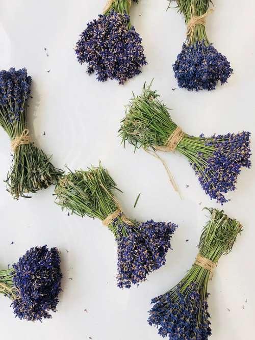 Flower Lavender Purple