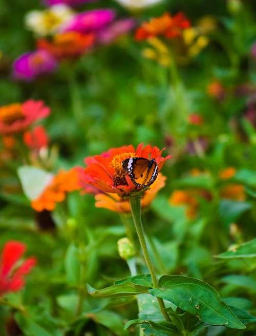 Flower Butterflies Blossom Nature Flora Spring