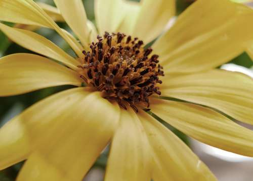 Flower Summer Plant Flora Bloom Field Season