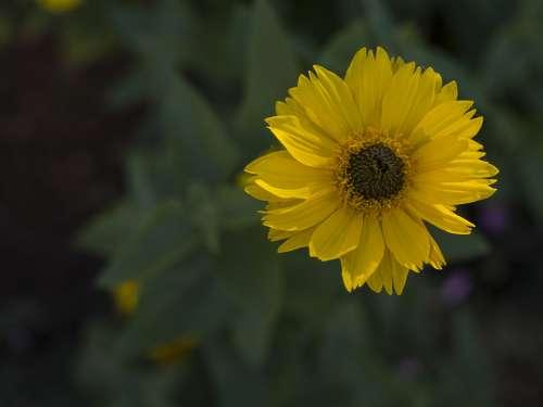 Flower Yellow Summer Flora Nature
