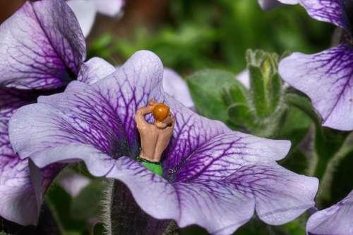 Flower Figure Miniature Plant Macro Summer