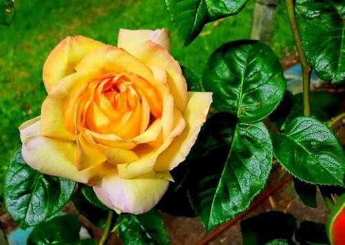Flower Flora Nature Yellow