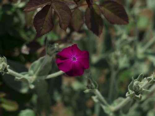 Flower Spring Flora Nature Petals Garden Flowers
