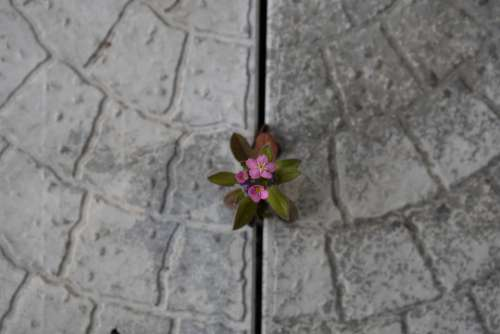 Flower Spring Life Power Desire Obstacle