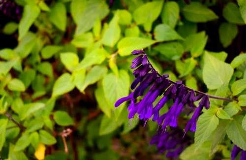 Flower Nature Green Garden Plant Romantic Petal