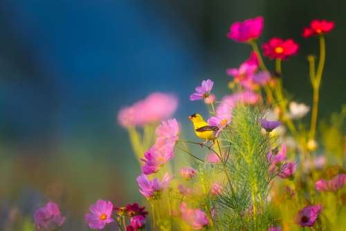Flowers Plants Blooms Bird Wildlife Landscape
