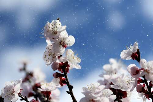 Flowers White Spring Tree Nature Plants Bloom