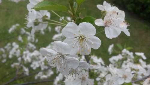 Flowers Spring Flowering Nature Tree Apple