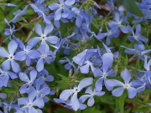 Flowers Spring Flowering