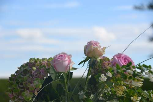 Flowers Roses Bouquet Wedding Pink Sky Blue