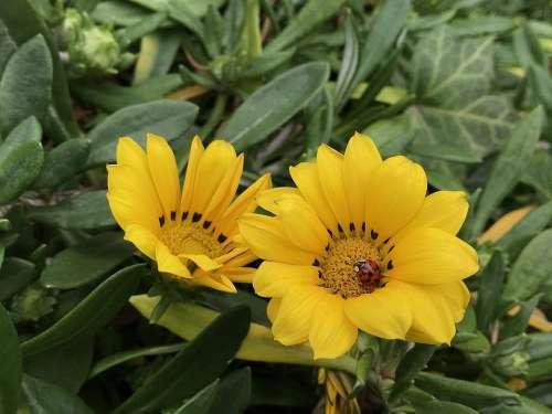 Flowers Yellow Wildflower Petal Plants Nature