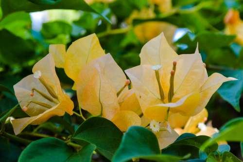 Flowers The Buds Asia Tropics Jungle Spring