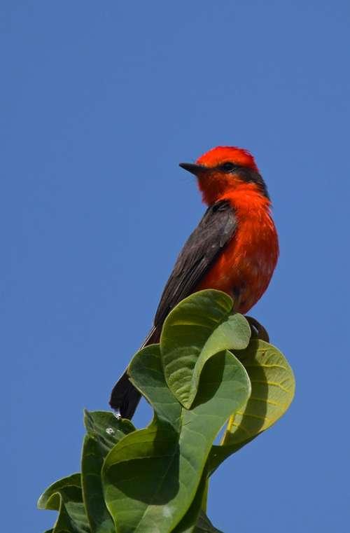 Fly Catcher Red Green Sun Birdlife