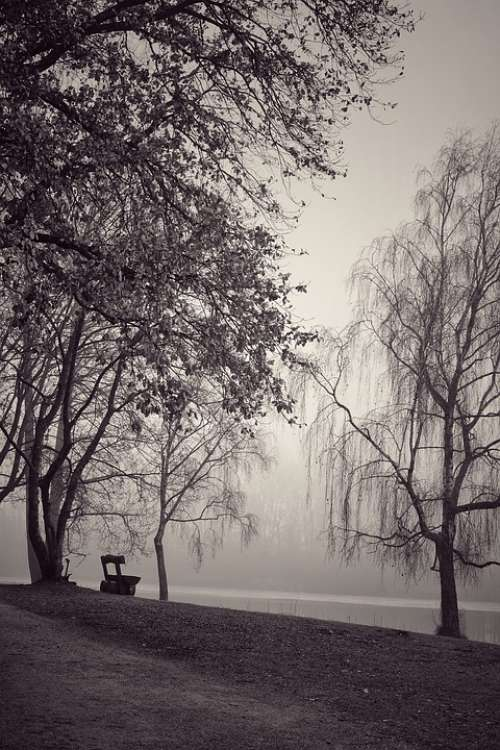 Fog Black And White Trees Atmosphere Mystical Mood