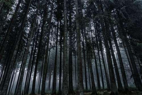 Forest Nature Landscape Log Trees Wood Leaves