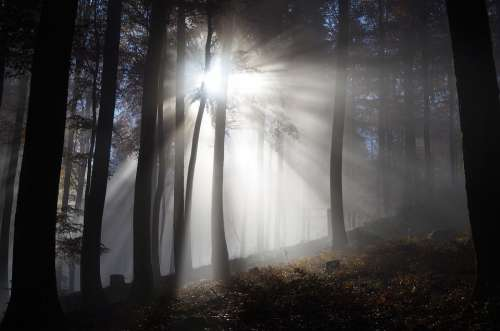 Forest Fog Autumn Trees Mood Mystical Sunbeam