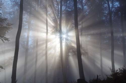 Forest Fog Trees Nature Mysterious Mystical