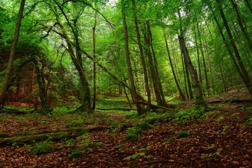 Forest Earth Nature Trees Leaves Green Aesthetic