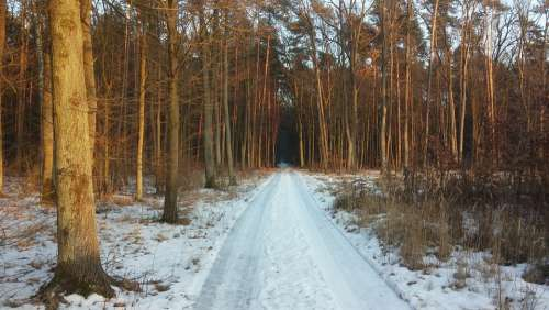 Forest Way Winter Road Landscape Tree The Path