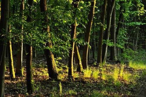 Forest Nature Trees Green Hiking Fantasy Idyllic