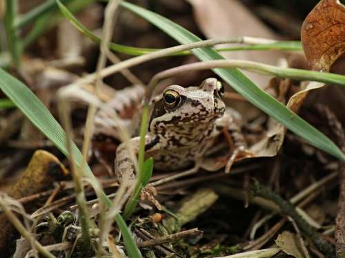 Frog View Amphibian Nature Eyes