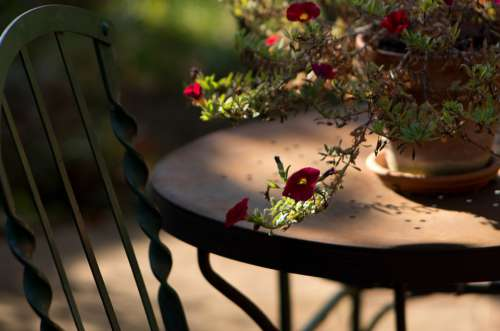 Garden Light In The Morning Table Chair Flower