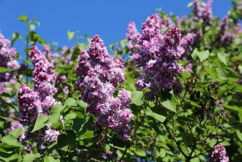 Garden Flowering Floral Botany Flowers Bloom
