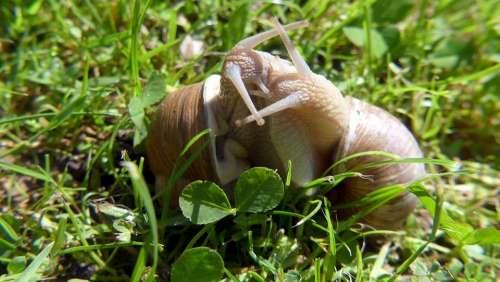 Garden Snails Nature Love