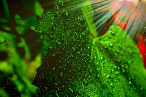 Grape Leaf Sunlight Droplets Water Dusk Green