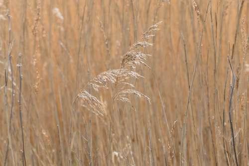 Grass Summer Nature Meadow Alone Rural